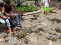 Ecuador_guaya3_ 002